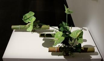 Ilaria Mibelli: Green Plant Materials